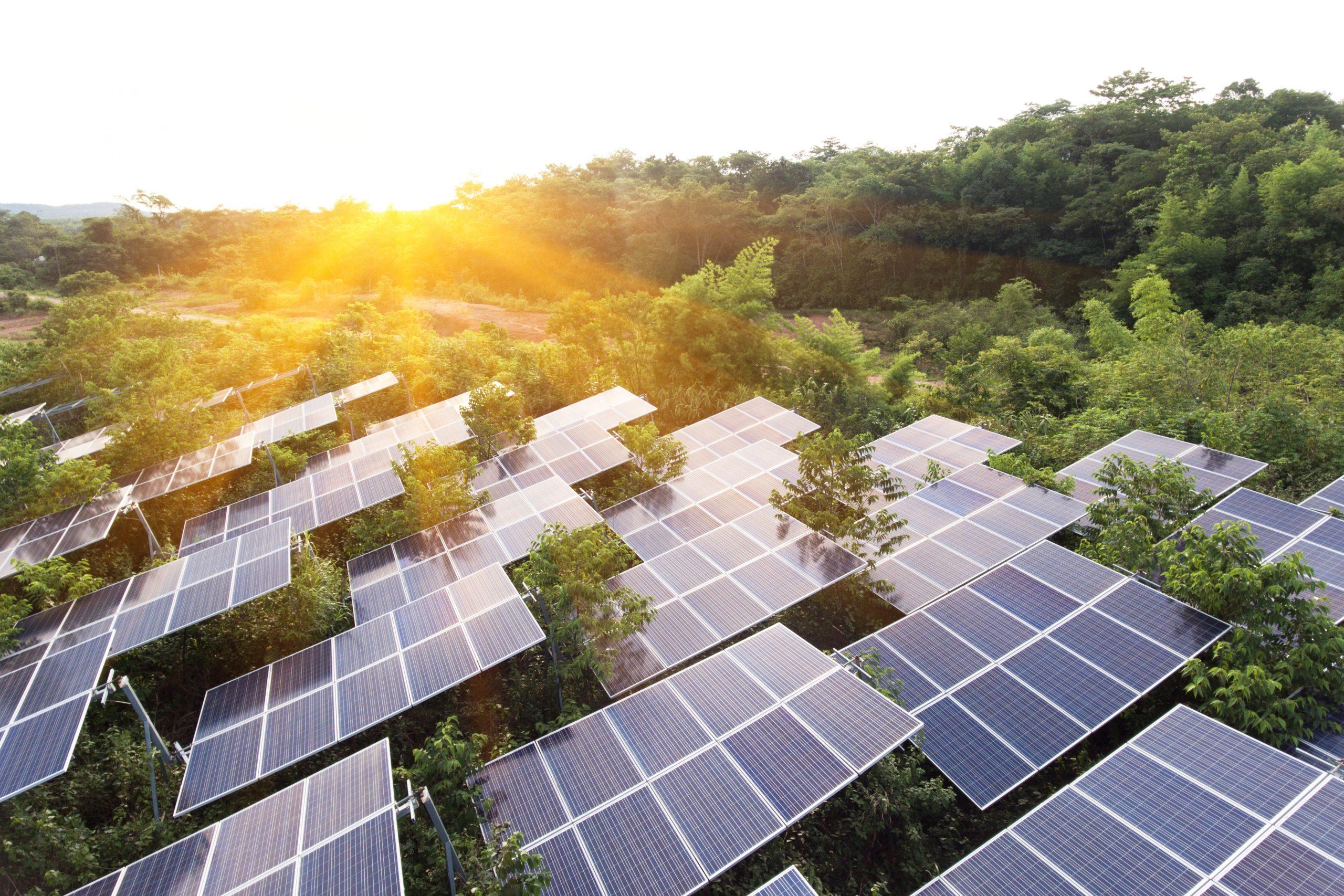 champs panneau solaire